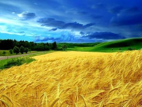 Земельная реформа раскалывает Украину?