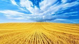 «Много земли, мало денег»: что стоит за упадком сельского хозяйства Украины?
